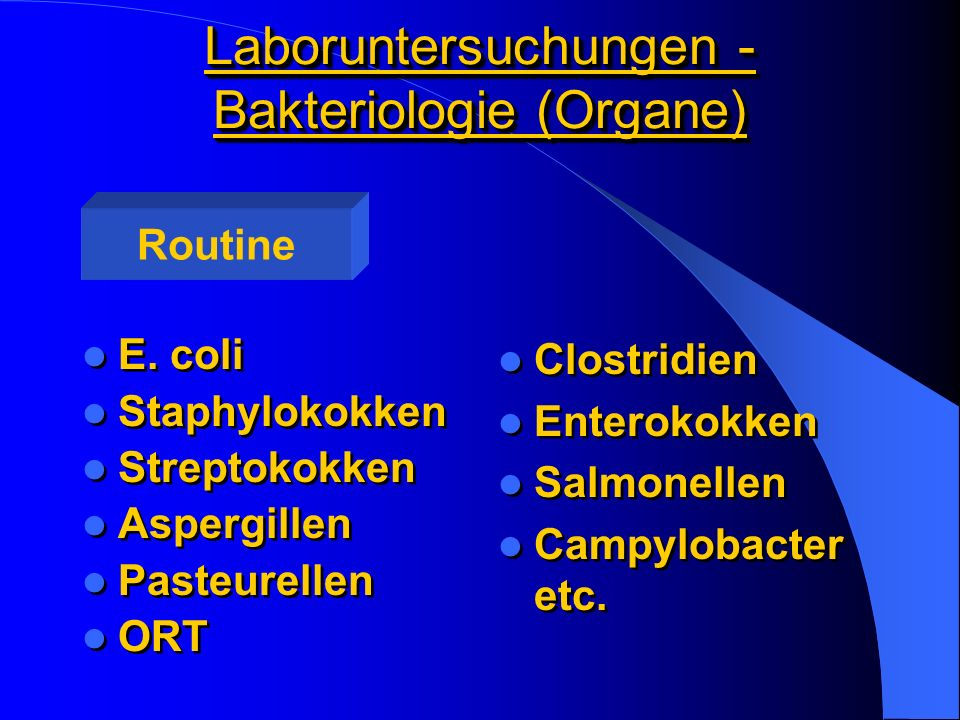 Laboruntersuchungen - Bakteriologie (Organe)