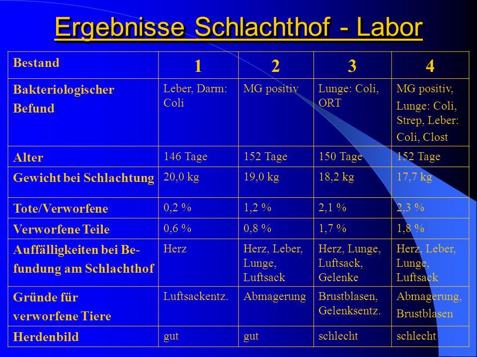 Ergebnisse Schlachthof - Labor