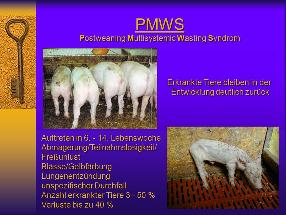 PMWS Postweaning Multisystemic Wasting Syndrom