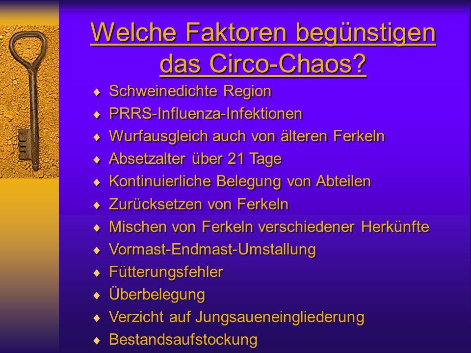 Welche Faktoren begünstigen das Circo-Chaos