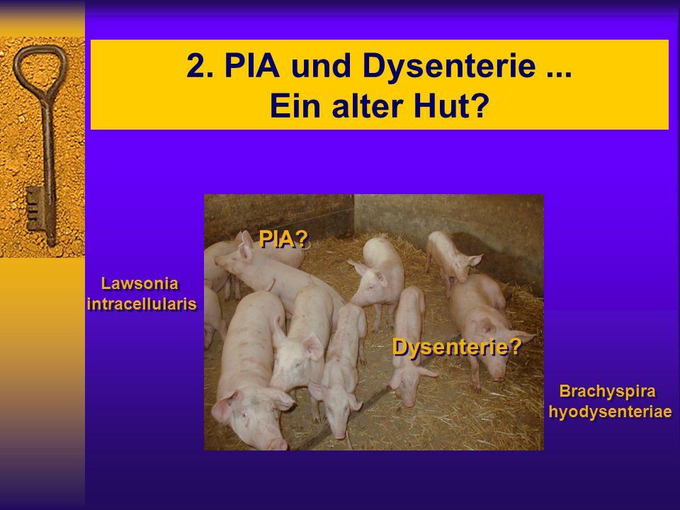 2. PIA und Dysenterie ... Ein alter Hut