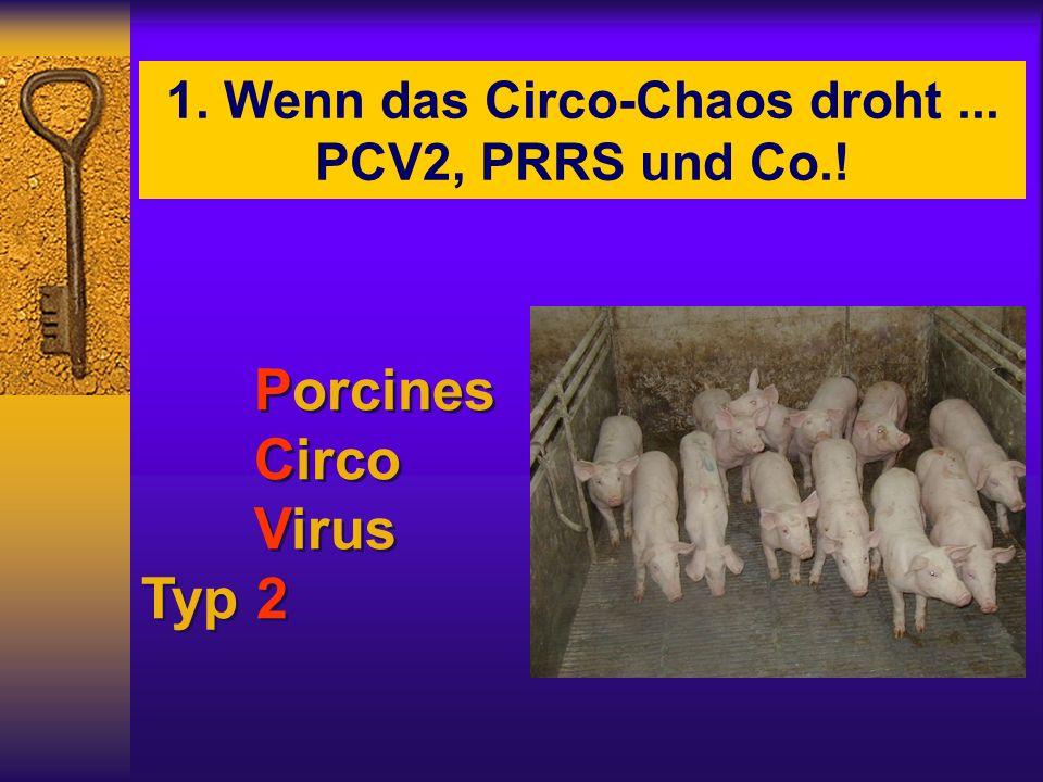1. Wenn das Circo-Chaos droht ... PCV2, PRRS und Co.!