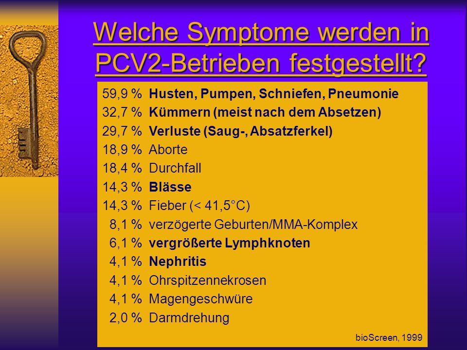 Welche Symptome werden in PCV2-Betrieben festgestellt