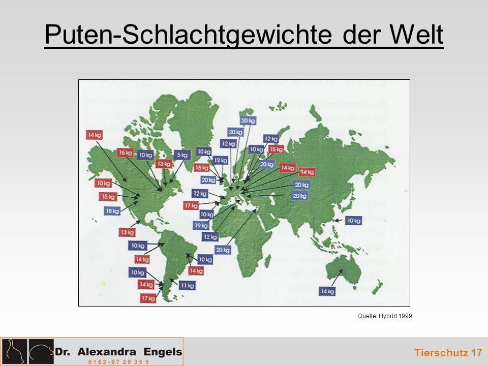 Puten-Schlachtgewichte der Welt