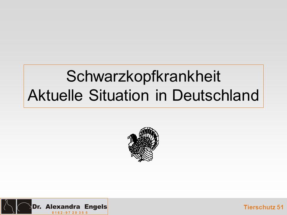 Schwarzkopfkrankheit Aktuelle Situation in Deutschland