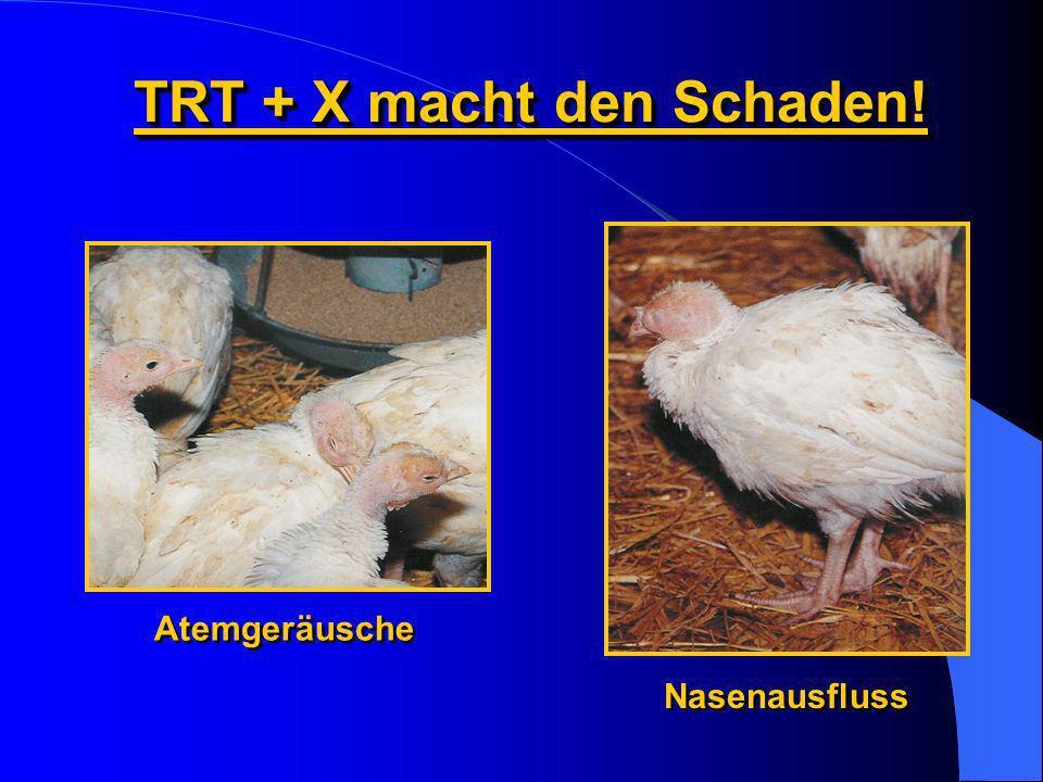 TRT + X macht den Schaden!