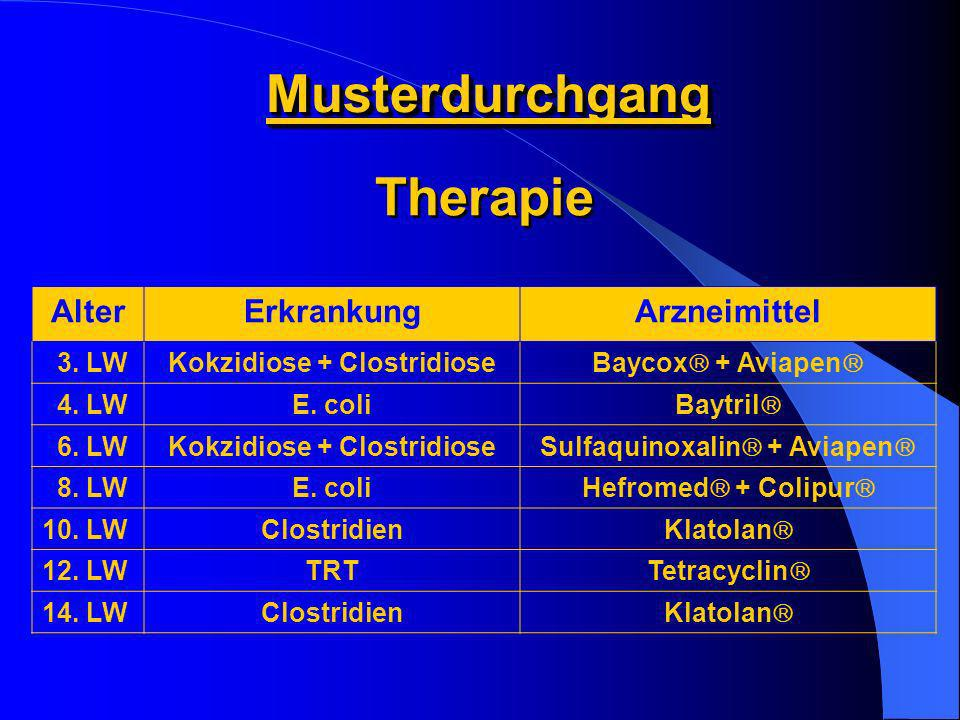Kokzidiose + Clostridiose Sulfaquinoxalin + Aviapen