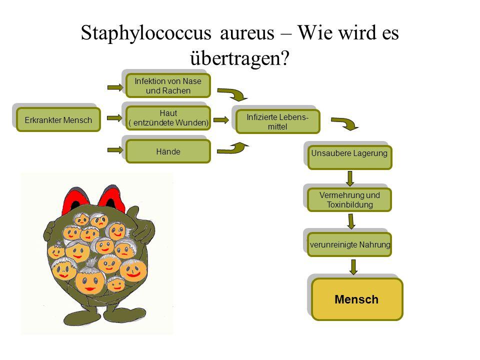 Staphylococcus aureus – Wie wird es übertragen