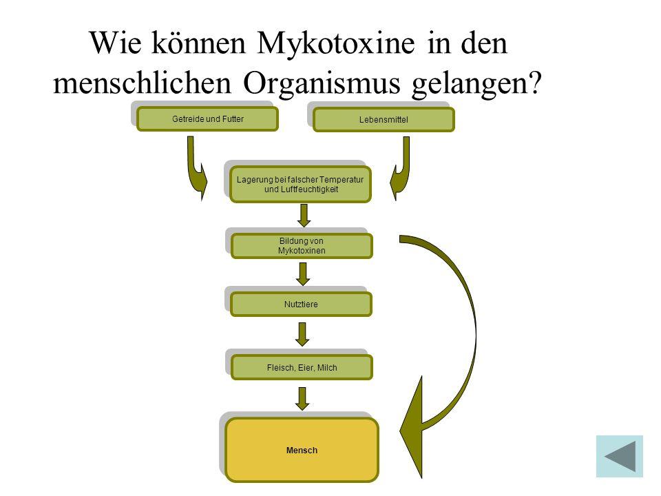 Wie können Mykotoxine in den menschlichen Organismus gelangen