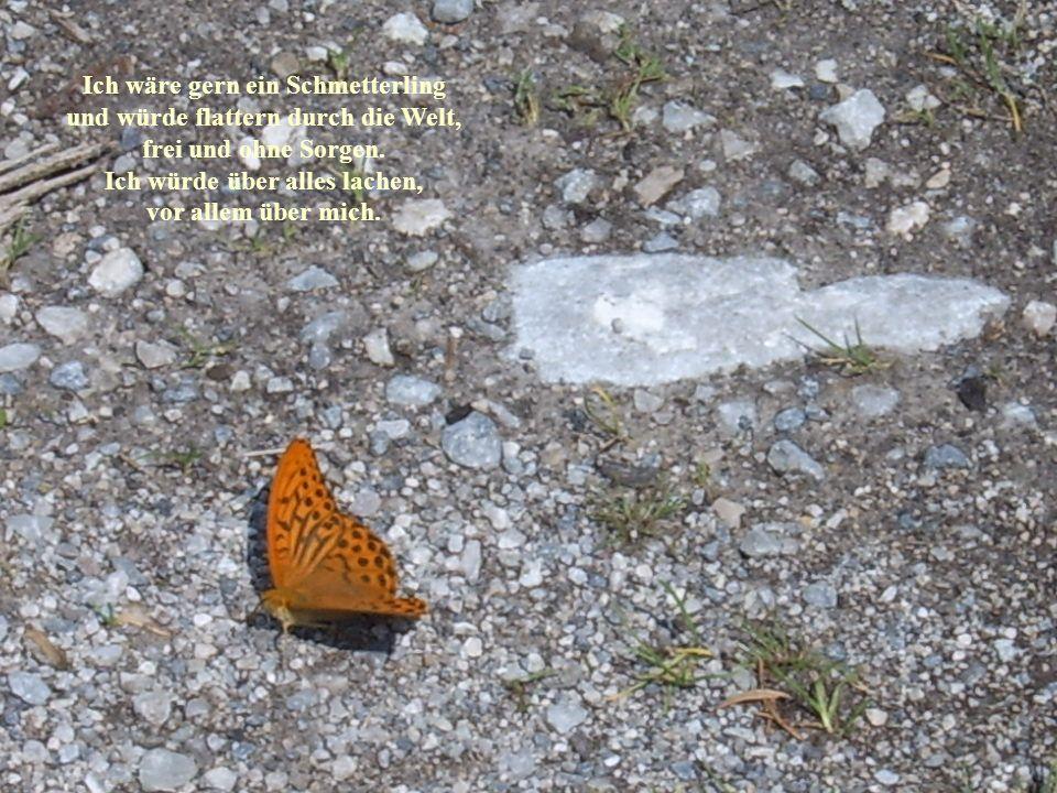 Ich wäre gern ein Schmetterling und würde flattern durch die Welt,