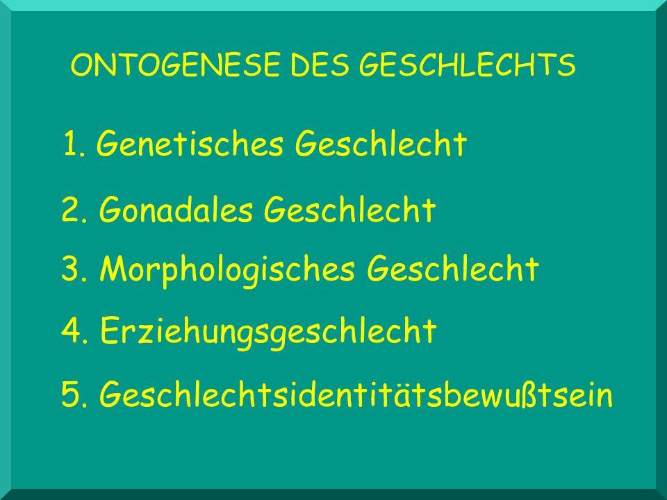 1. Genetisches Geschlecht