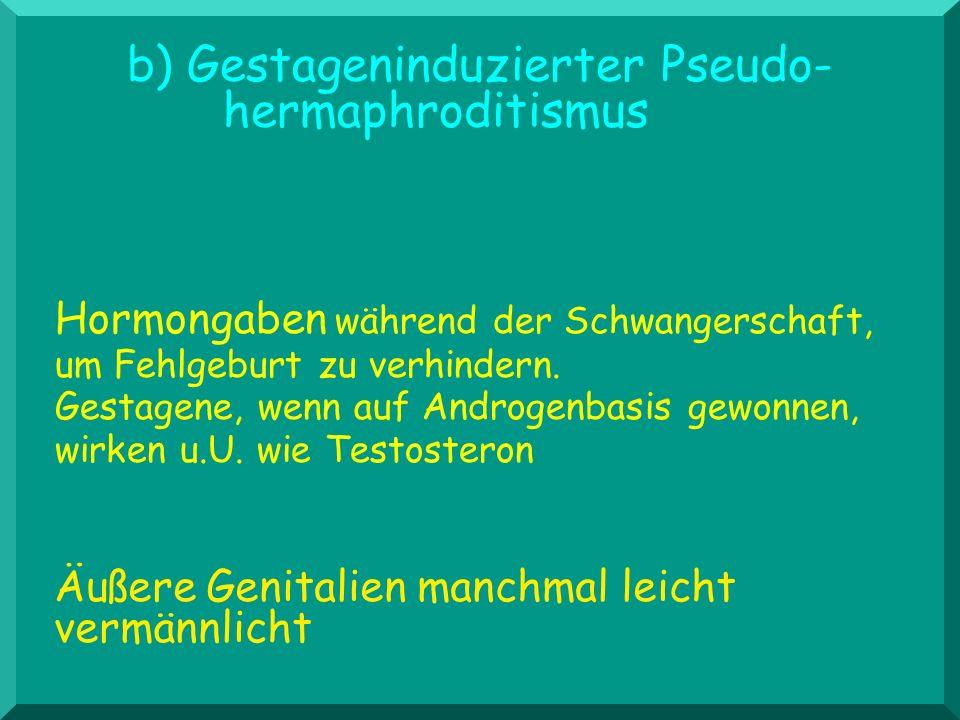 b) Gestageninduzierter Pseudo- hermaphroditismus