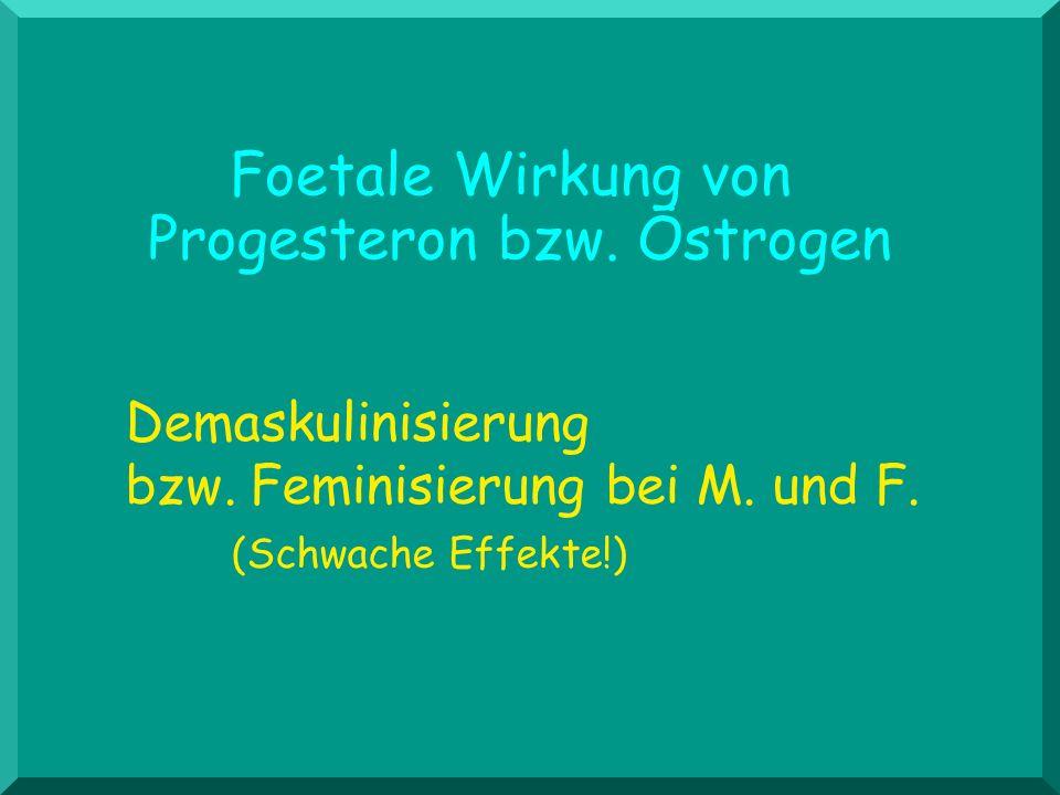 Foetale Wirkung von Progesteron bzw. Östrogen