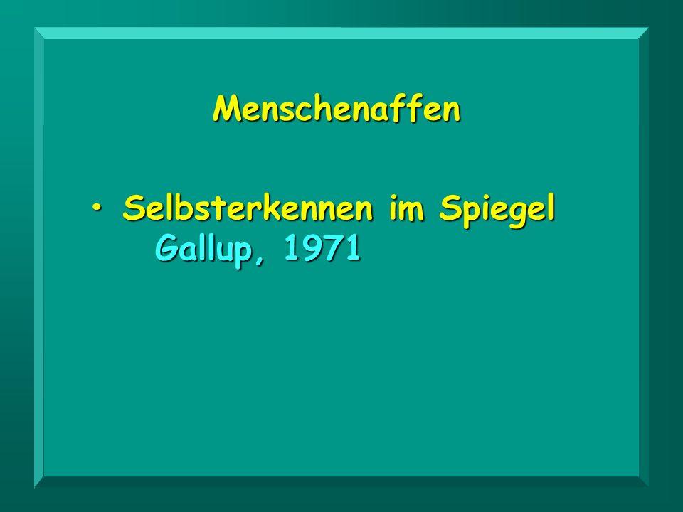 Menschenaffen • Selbsterkennen im Spiegel Gallup, 1971