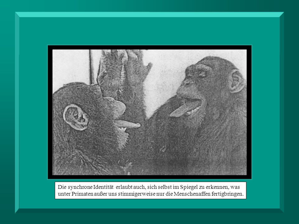 Die synchrone Identität erlaubt auch, sich selbst im Spiegel zu erkennen, was unter Primaten außer uns stimmigerweise nur die Menschenaffen fertigbringen.