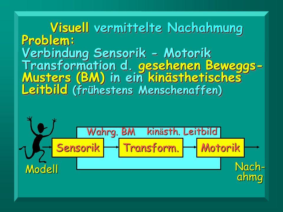 Visuell vermittelte Nachahmung Problem: Verbindung Sensorik - Motorik