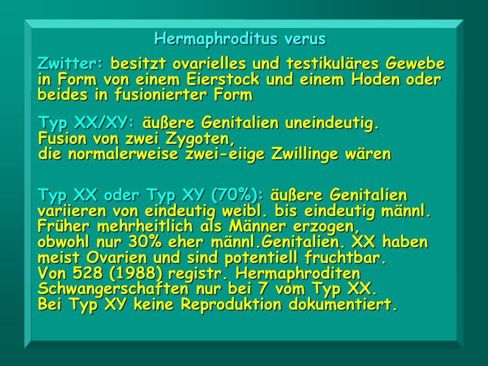 Hermaphroditus verus Zwitter: besitzt ovarielles und testikuläres Gewebe in Form von einem Eierstock und einem Hoden oder beides in fusionierter Form.