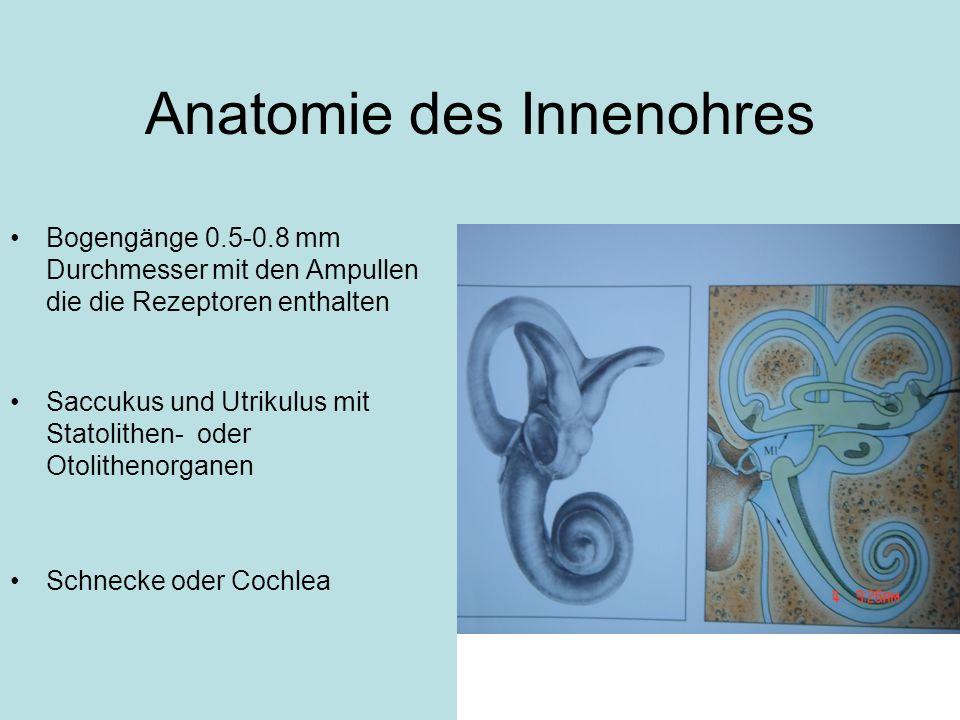 Anatomie des Innenohres
