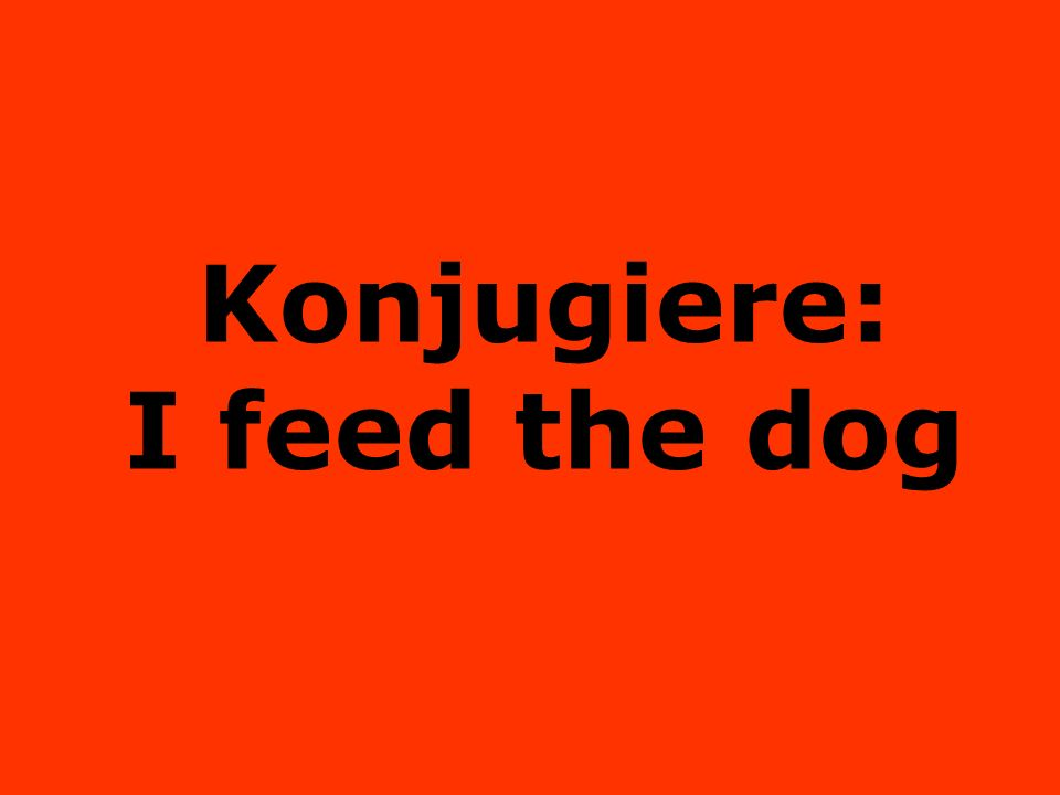 Konjugiere: I feed the dog