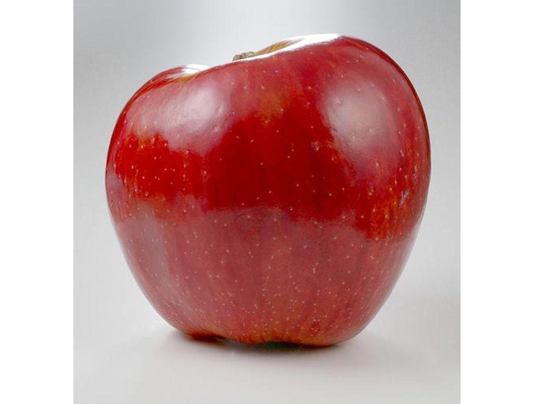 Teile eines Apfels.