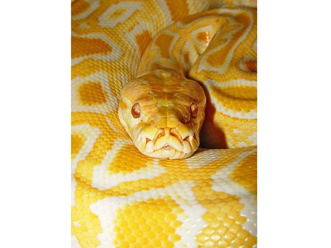 ein gelber Kopf