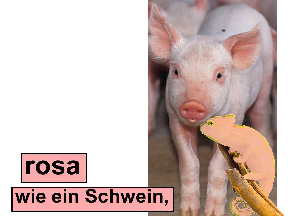 rosa wie ein Schwein,