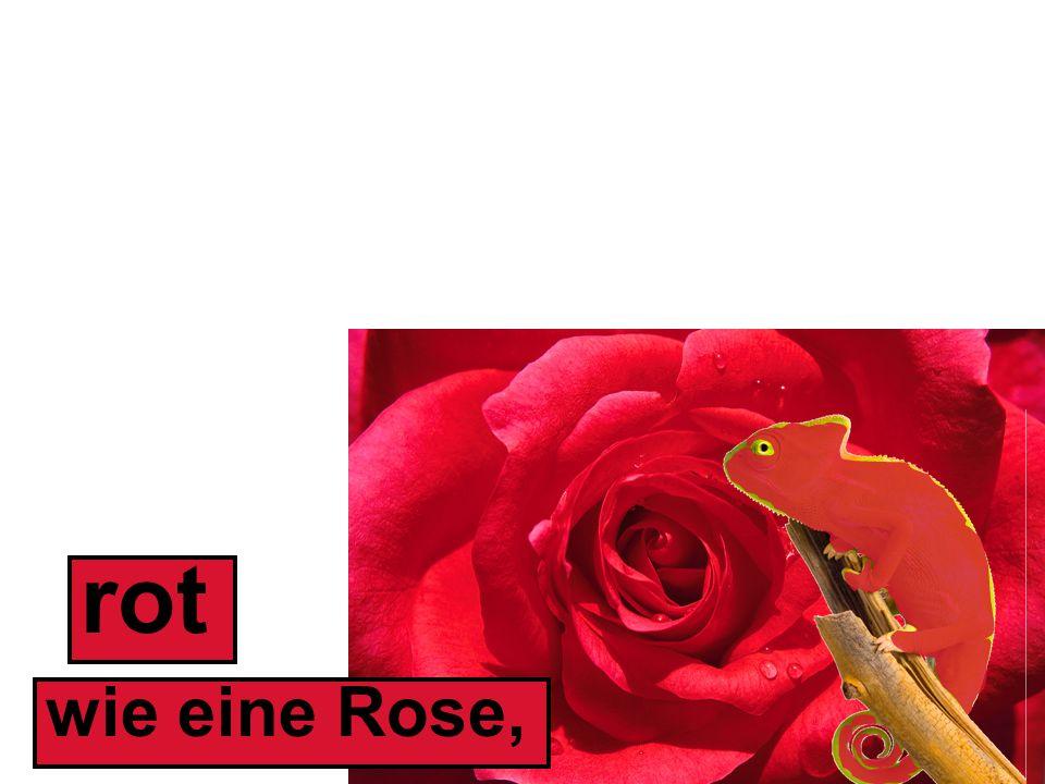 rot wie eine Rose,