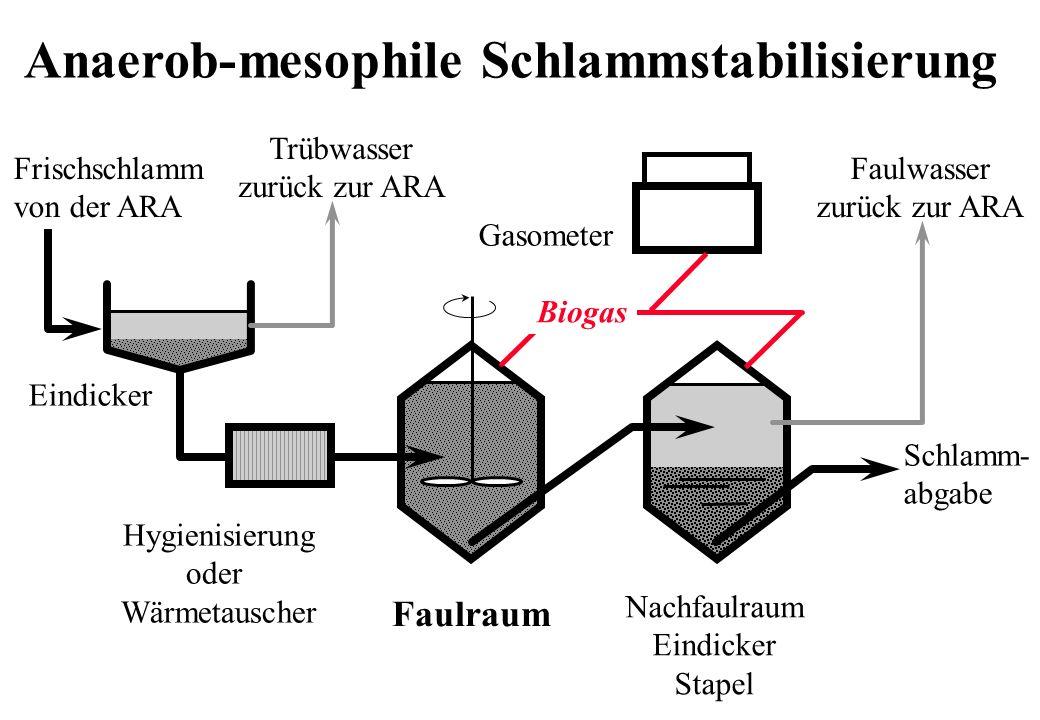 Anaerob-mesophile Schlammstabilisierung