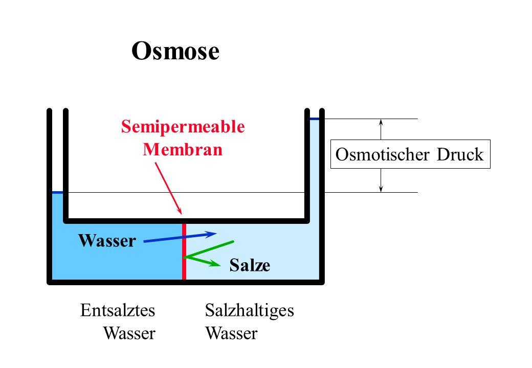 Osmose Salzhaltiges Wasser Entsalztes Salze Semipermeable Membran