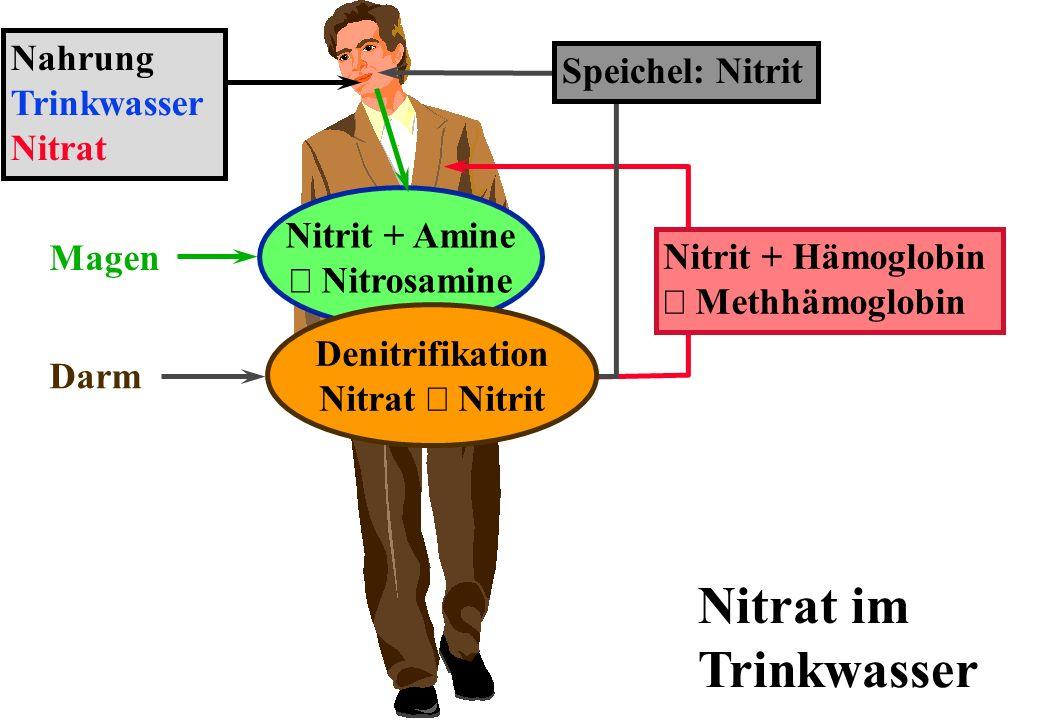 Nitrat im Trinkwasser Nahrung Speichel: Nitrit Trinkwasser Nitrat