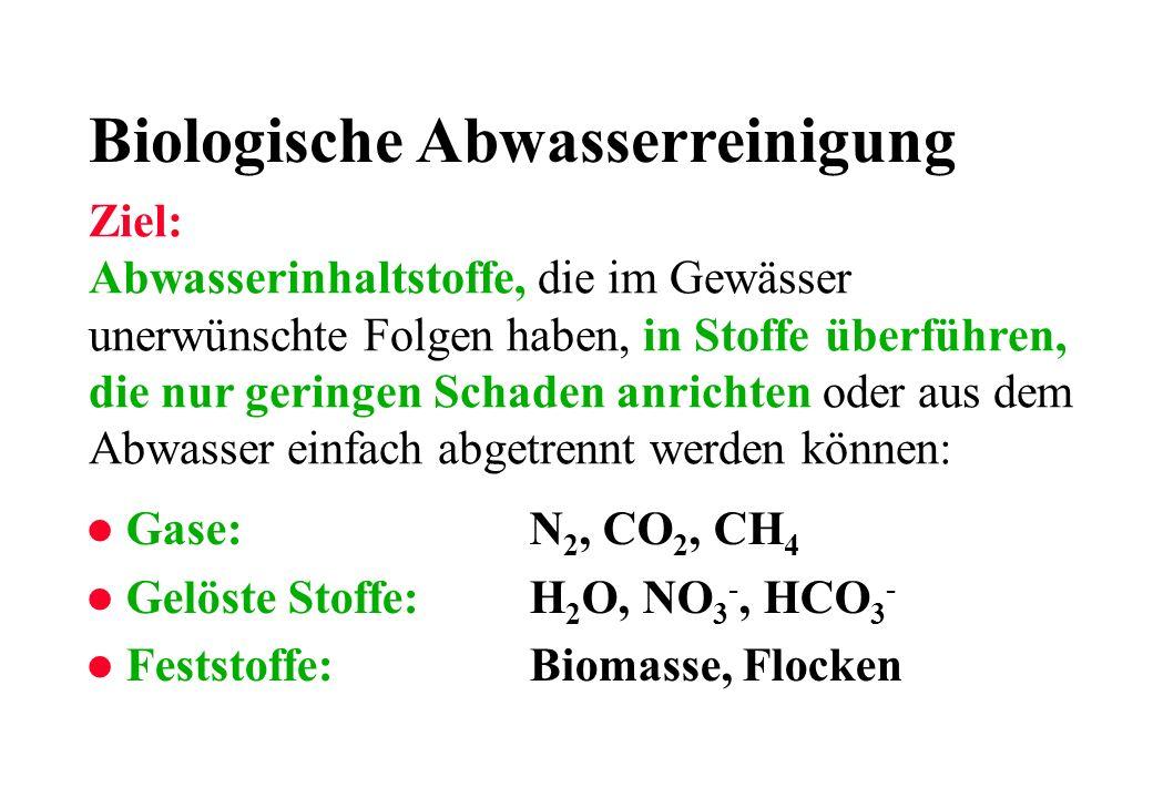 Biologische Abwasserreinigung
