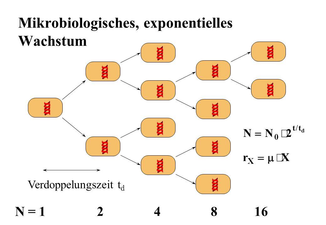 Mikrobiologisches, exponentielles Wachstum