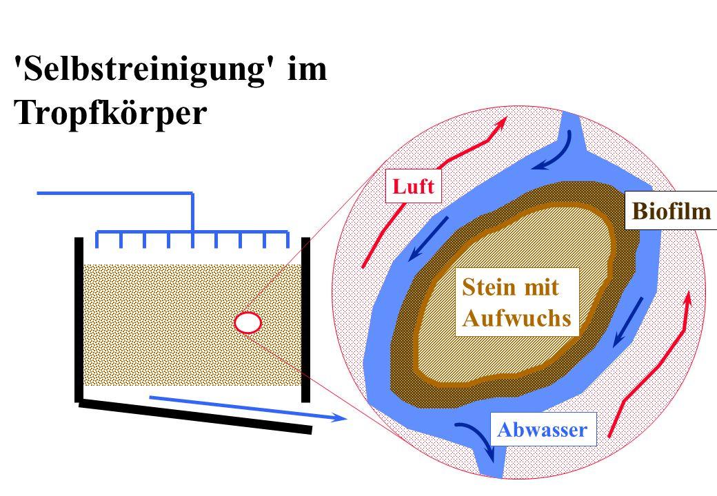 Selbstreinigung im Tropfkörper Biofilm Stein mit Aufwuchs Luft