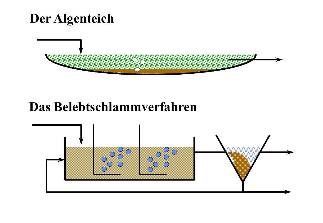 Der Algenteich Das Belebtschlammverfahren