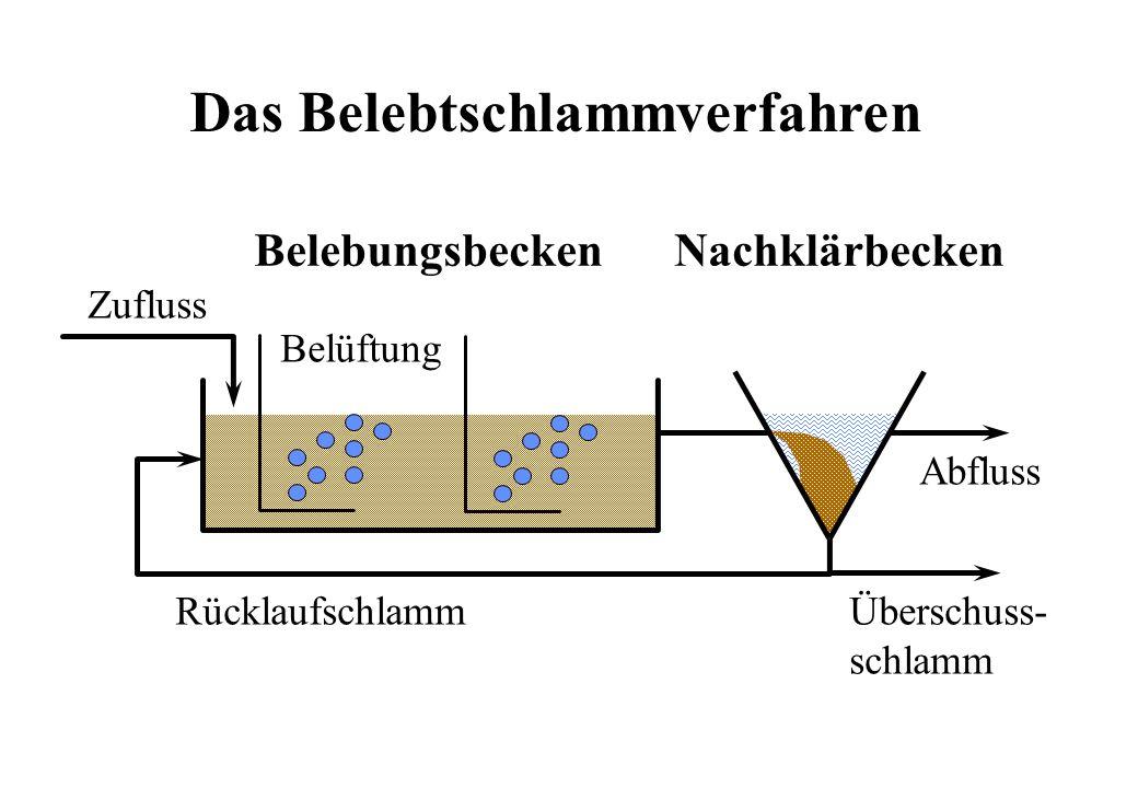 Das Belebtschlammverfahren