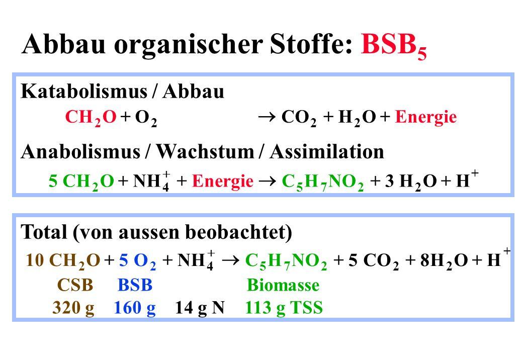 Abbau organischer Stoffe: BSB5