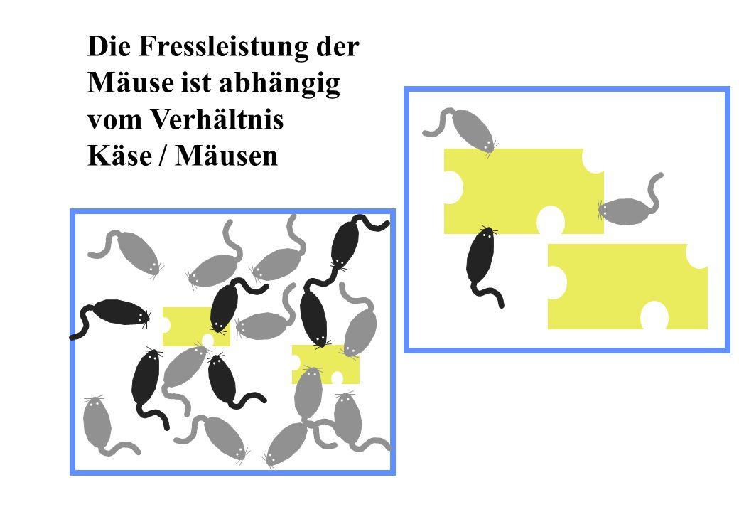 Die Fressleistung der Mäuse ist abhängig vom Verhältnis Käse / Mäusen