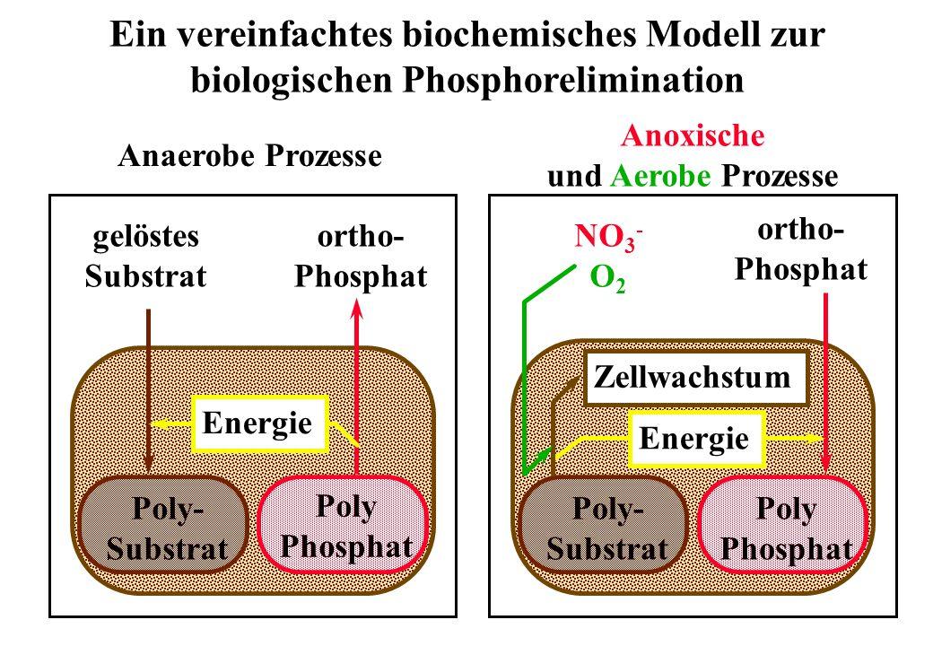 Ein vereinfachtes biochemisches Modell zur