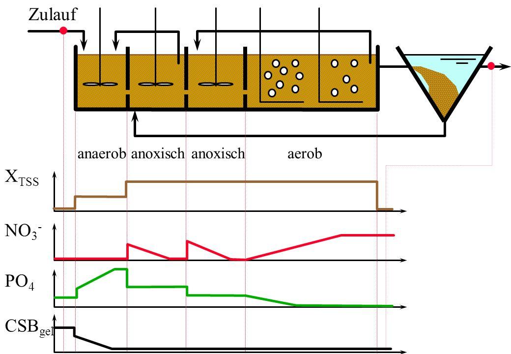 Zulauf anaerob anoxisch anoxisch aerob XTSS NO3- PO4 CSBgel