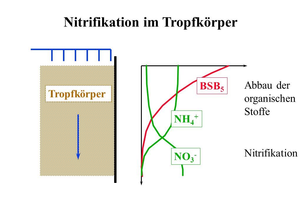 Nitrifikation im Tropfkörper