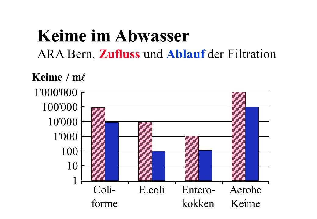 Keime im Abwasser ARA Bern, Zufluss und Ablauf der Filtration