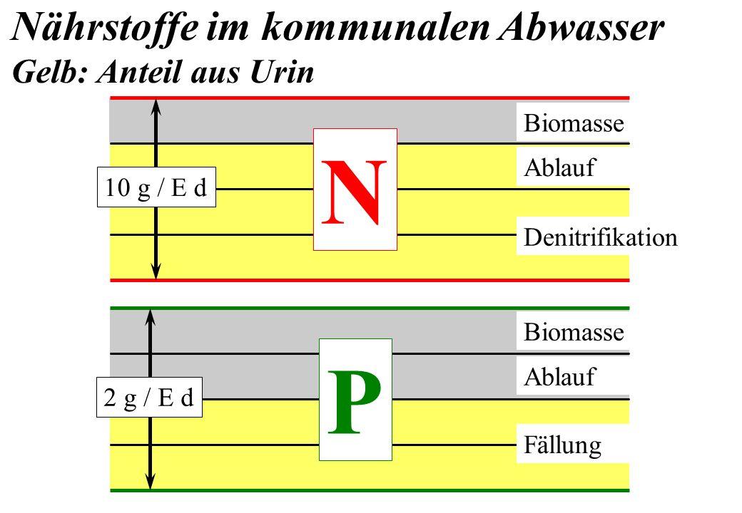 N P Nährstoffe im kommunalen Abwasser Gelb: Anteil aus Urin Biomasse