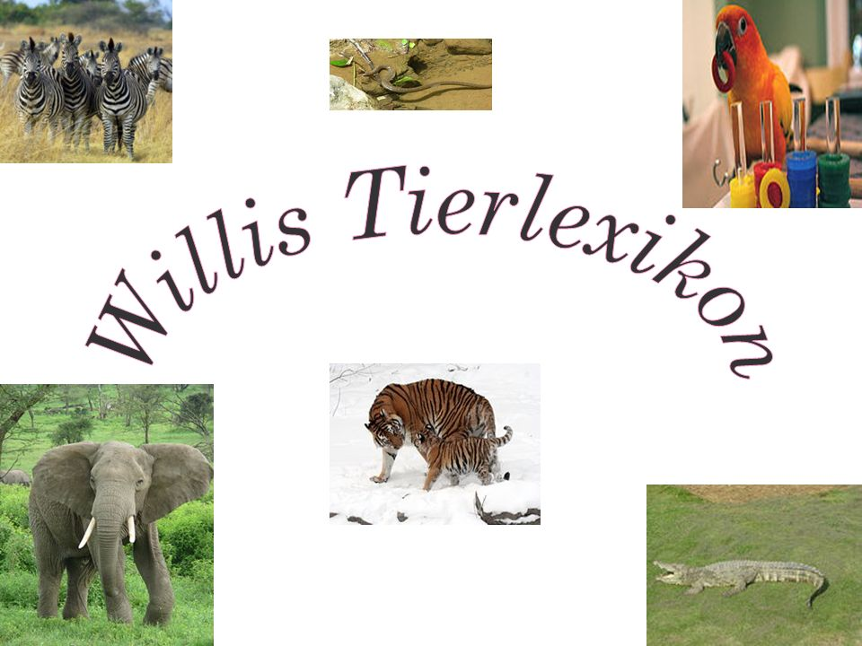 Willis Tierlexikon