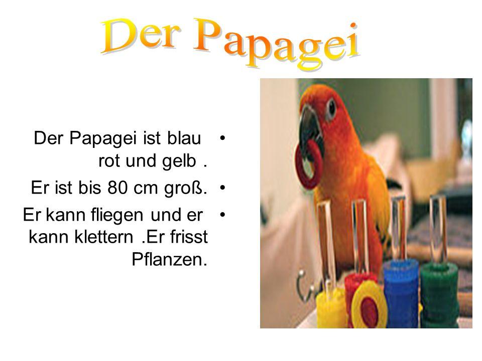 Der Papagei Der Papagei ist blau rot und gelb . Er ist bis 80 cm groß.