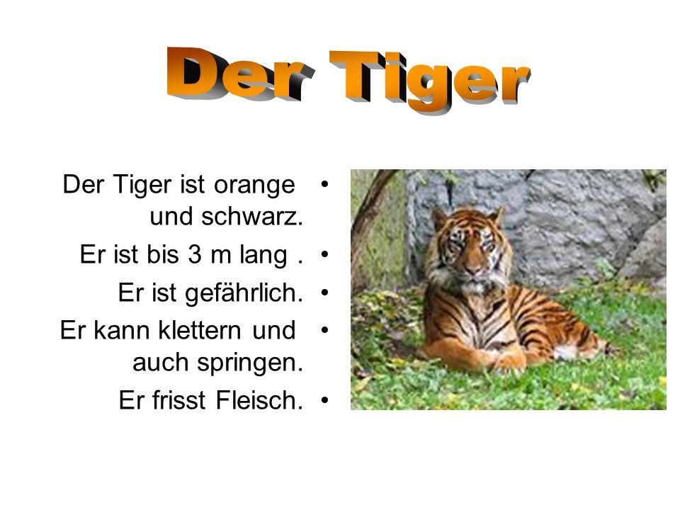 Der Tiger Der Tiger ist orange und schwarz. Er ist bis 3 m lang .