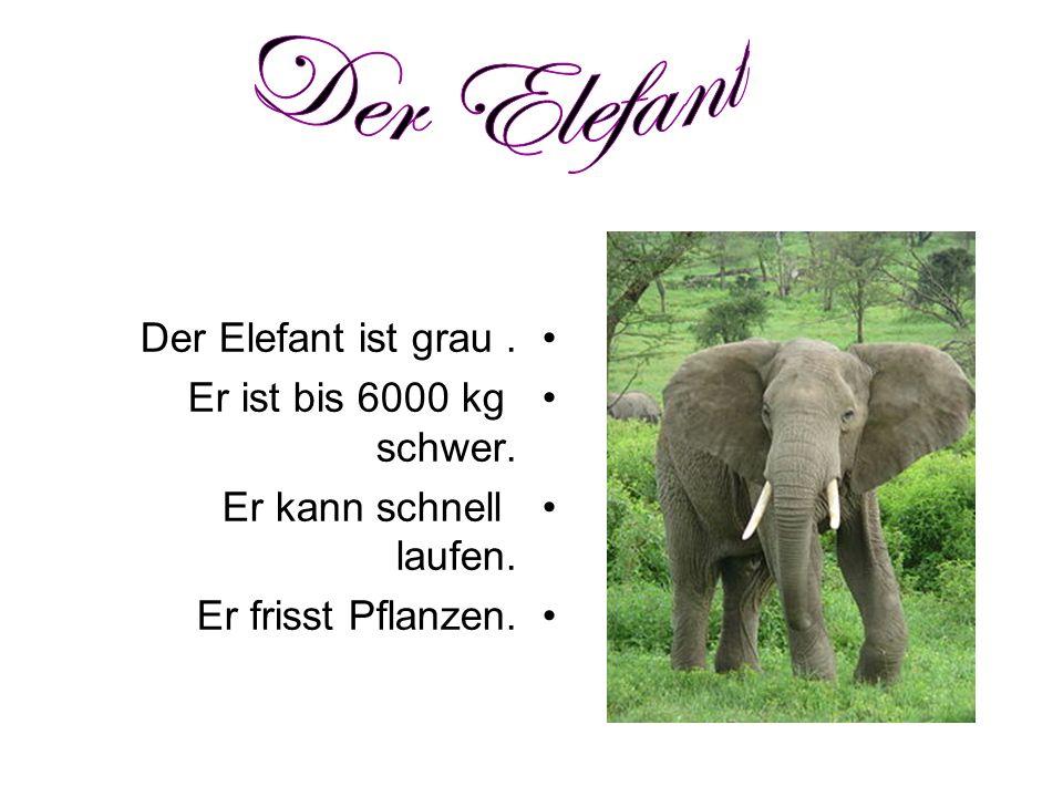 Der Elefant Der Elefant ist grau . Er ist bis 6000 kg schwer.