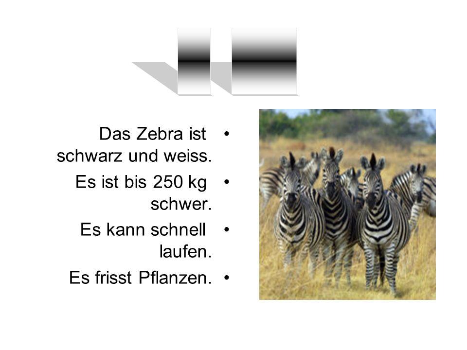 __ ____ Das Zebra ist schwarz und weiss. Es ist bis 250 kg schwer.