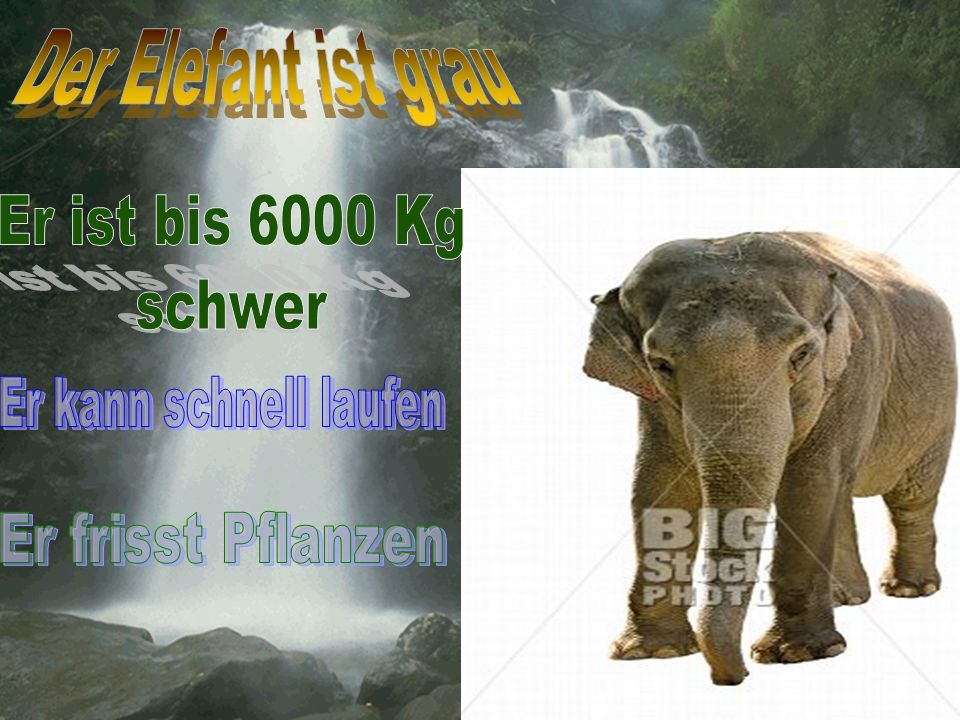 Der Elefant ist grau Er ist bis 6000 Kg schwer Er kann schnell laufen