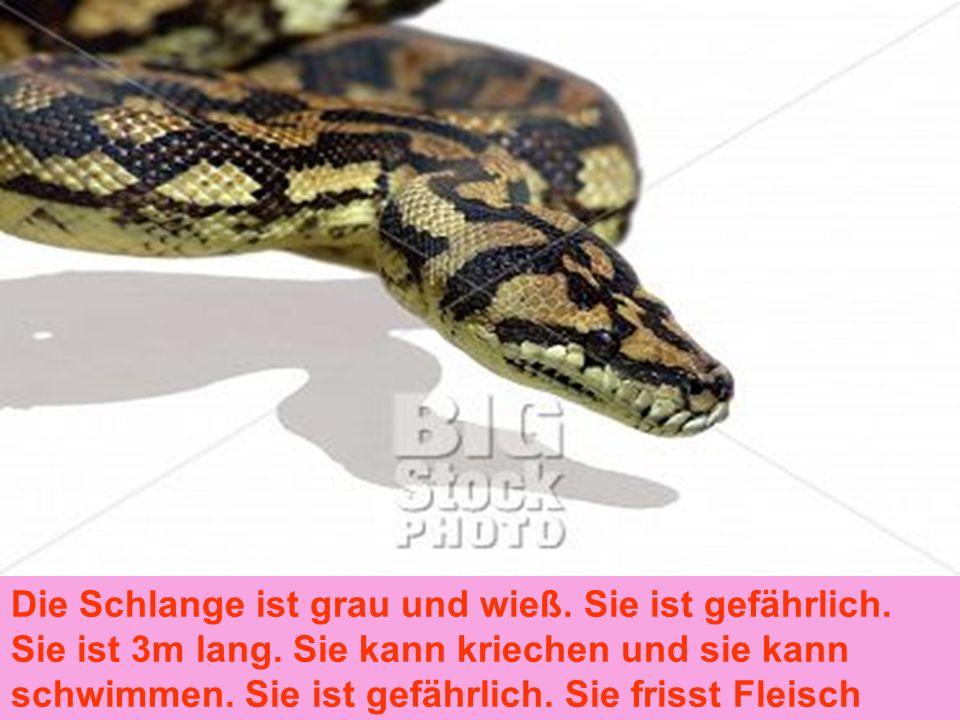 Die Schlange ist grau und wieß. Sie ist gefährlich. Sie ist 3m lang