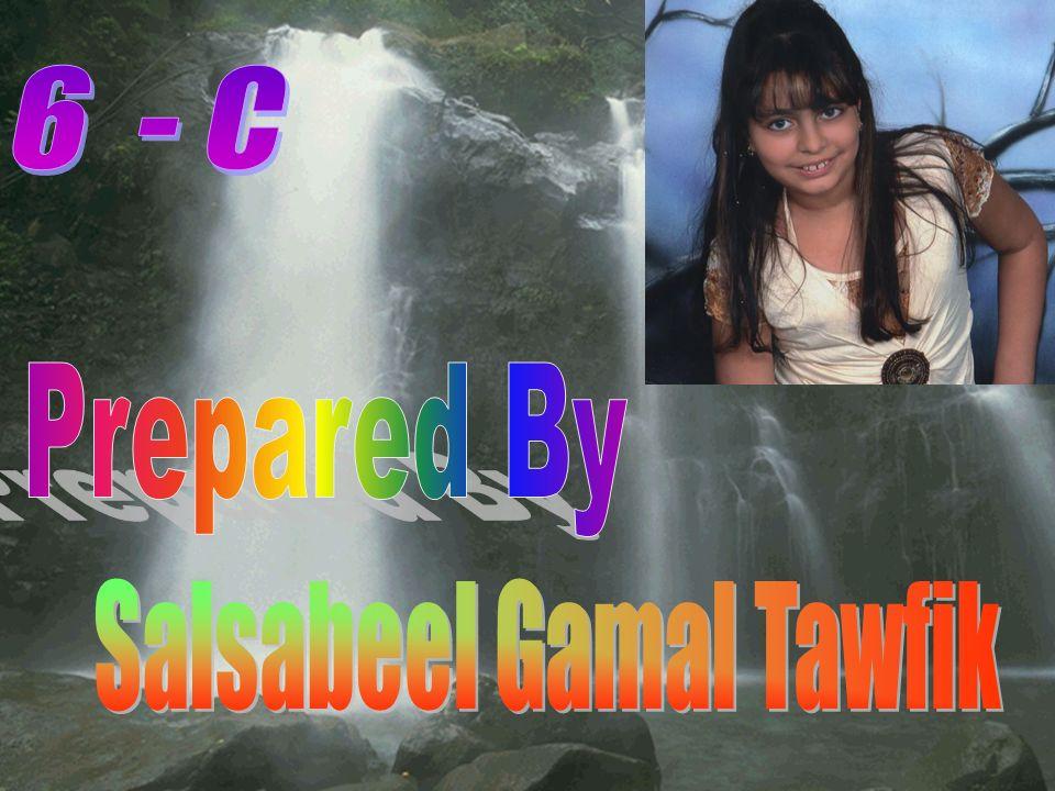 Salsabeel Gamal Tawfik